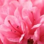 cropped-Flowers1-e1392571569767.jpg