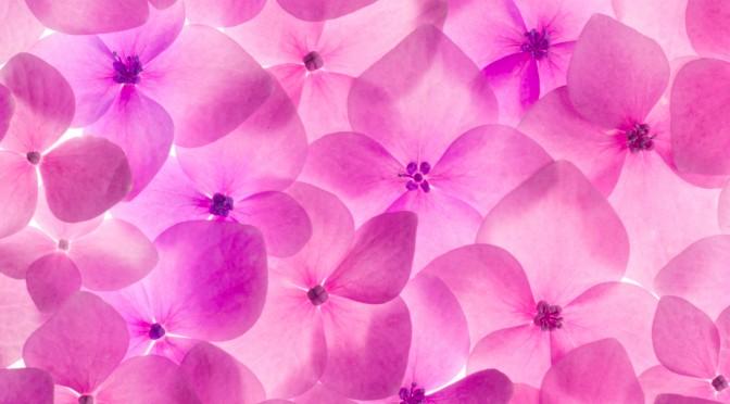 modne kvinder hvornår kommer menstruation efter ægoplægning