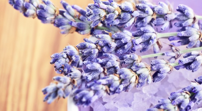 Lavender flowers and bath salt