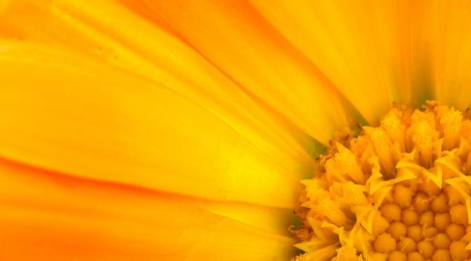 Vulvodyni – Den skjulte smerte